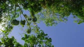 silence : A full shot rotating 360 degrees. Wide shot showing leaves of trees and the sky Stock Footage