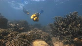 An underwater slow motion shot of a scuba diver using a sea scooter near the coral reef. Vidéos Libres De Droits