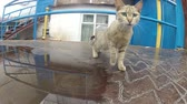 houseless : Cat on the iron roof