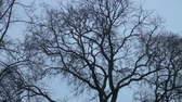 assombro : The branch of a tree without leaves against the sky Stock Footage