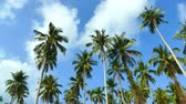 рай : Beautiful tropical coconut palm tree on sky background Стоковые видеозаписи
