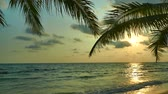 tropikal meyve : Beautiful tropical beach and sea landscape at sunset time