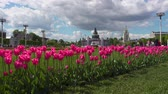 springtime : Pink tulips on VDNKh Stock Footage