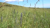 Казахстан : Wild grasses. Mixed grass meadow. Summer sunny day. Beautiful summer landscape. Стоковые видеозаписи