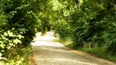 pave : A paved road among trees. Timelapse 4K Stock Footage