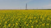 field : Field of sunflowers. Aerial view of agricultural fields flowering oilseed. Top view. Stock Footage