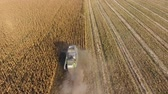 birleştirmek : Harvester harvests corn. Collect corn cobs with the help of a combine harvester. Ripe corn on the field Stok Video