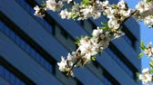 контрастировать : Modern sustainable city in spring, with a closeup of the branch of a flowering tree moved by the breeze and a building in the background.