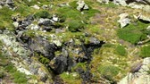 pirineus : Small crystalline stream. Pure water gushing between rocks on a mountain slope.Aerial view. Vídeos