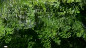 уборная : Green fern leaf reflected with ripples in the water of a pond.