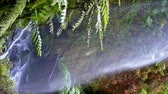 vertical growth : Video in vertical format.Detail of Waterfall The Lindens with giant ferns and big falling water, on the island of La Palma, Canary Islands, Spain. Stock Footage