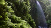 paproć : Waterfall The Lindens with giant ferns and big falling water, on the island of La Palma, Canary Islands, Spain.