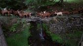 sheepdog : Herd of goats crossing a river with a small waterfall, evoking rural life and healthy and organic food. Stock Footage
