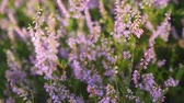 funda : Flowers of heather - zoom in