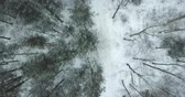 rota : Aerial view of the winter forest Stock Footage