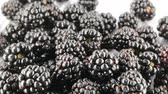 amoras : Wild blackberries