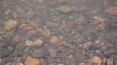 wet : Water Striders in river
