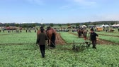 działka : Demonstration of old fashioned ploughing technique using horses during the World Ploughing Competition in Germany 2018