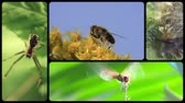 ouriço : Small animals wildlife collage
