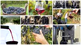 vinificação : a collage including people harvesting grapes, red wine pouring into a glass and automatic bottling lines wine equipment detail.