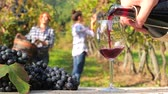 vinificação : edited sequence including people harvesting grapes, red wine pouring into a glass and automatic bottling lines wine equipment detail.