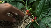 pano de saco : Coffee on the coffee beans background