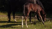 pony : A Pretty Foal Stands In A Summer Paddock