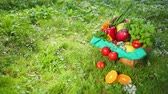 prezzemolo : Composition Of Organic Vegetable Basket, Resting On Green Grass. Part Of Things Lies In Basket Part On Grass. Apple, Mango Greens, Onions, Carrots, Parsley, Pepper, Tomato, Orange, Basil. NATURE