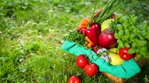 vime : Composition Of Organic Vegetable Basket, Resting On Green Grass. Part Of Things Lies In Basket Part On A Grass. When Moving Camera Red Tomato From Basket On Grass Falls. . Prores, Slow Motion, 4k Stock Footage