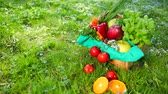 káposzta : Composition Of Organic Vegetable Basket, Resting On Green Grass. Part Of Things Lies In Basket Part On Grass. Apple, Mango Greens, Onions, Carrots, Parsley, Pepper, Tomato, Orange, Basil. NATURE 4k Stock mozgókép