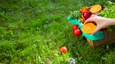 prezzemolo : Hand Corrects Vegetables And Fruit In Wooden Basket From Beige Cloth. Basket Is On Green Grass. Concept Of Healthy Lifestyle Environmentally Friendly Products And Food. Pepper, Tomato, Orange, Basil