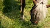 seek : Horse is eating fresh grass on the green meadow, close up. Prores, slow motion Stock Footage