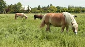 distante : Herd horses grazing on the lawn. A brown horse with a bridle eats grass and shakes a white mane. Rural houses in the background. Prores, slow motion, wide angle Stock Footage