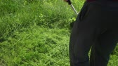 snoeien : Man gardener mows tall green grass, holding in courageous hands, gasoline lawn mower, in the afternoon, in Sunny weather, summer, weeds flying in different directions, close-up Stockvideo