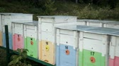 imkerei : many colored beehives, blue, pink, yellow, green, orange with numbering