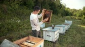 imkerei : beekeeper stands near the hives holding bee frame in which there is a honeycomb