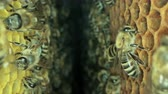imkerei : Busy bees inside the hive with open and sealed cells for sweet honey