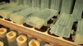 imkerei : shelves with cell curlers for the withdrawal of queen bee in a special locker