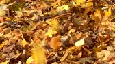Autumn leaves falling in slow motion colorful fall season, France