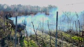 виноградник : Burning of the vines in winter, vineyard, AOC SAINT-EMILION, GIRONDE, France