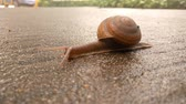 slippery : snail crawling on a wet concrete floor