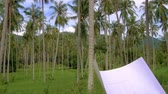 müteahhit : Architector inspect land for construction site in coconut palm tree grove Stok Video