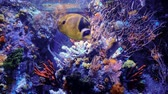 Сингапур : Coral fish in aquarium. Marine life