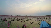 udon : Floating at Red Lotus Lake Stock Footage