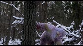neanderthal : Yeti fairy tale character in winter forest. Outdoor fantasy Ultra HD footage.