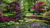 Traditional Japanese Garden in The Hague. 4K Time Lapse Footage.