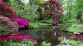 flower gardening : Traditional Japanese Garden in The Hague. HD Footage. Stock Footage