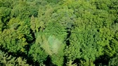 arka plân : Flying slowly over trees crown in coniferous forest during windy day, aerial view