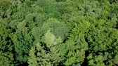 branches : Flying slowly over trees crown in coniferous forest during windy day, aerial view