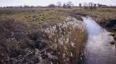 sutil : Dry reed grass moves slowly by blowing wind next to small river. Baker Path, Tarvin, Cheshire, England. Camera static Stock Footage